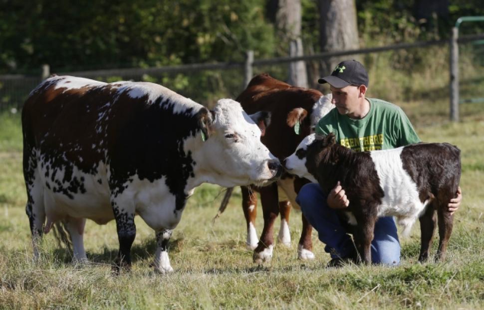 American Cattle Farm